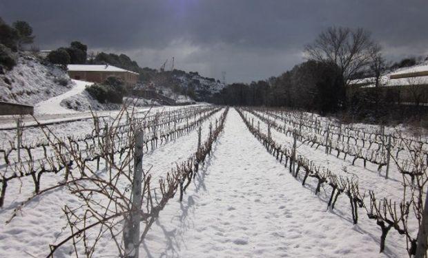 La nieve provocó fuertes pérdidas en el agro riojano.