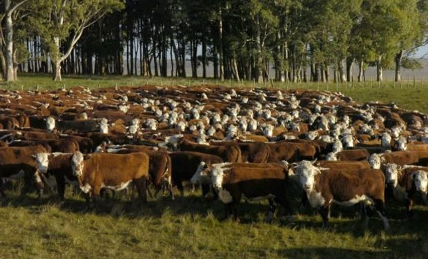 Cuando hay seca y llueve, las pasturas acumulan nitritos que pueden llegar a matar ganado.