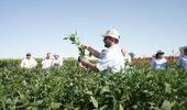 Un año de NK en el mercado argentino: qué se presentó para soja, maíz y girasol en 2020 y adelantos para 2021