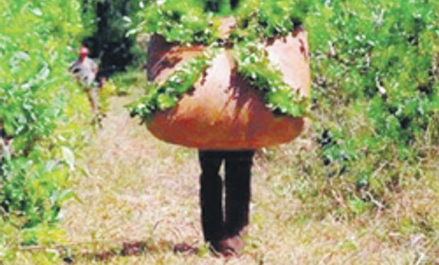 Productores de yerba culpan por precios altos a industria