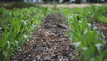 Soluciones para conservar el suelo
