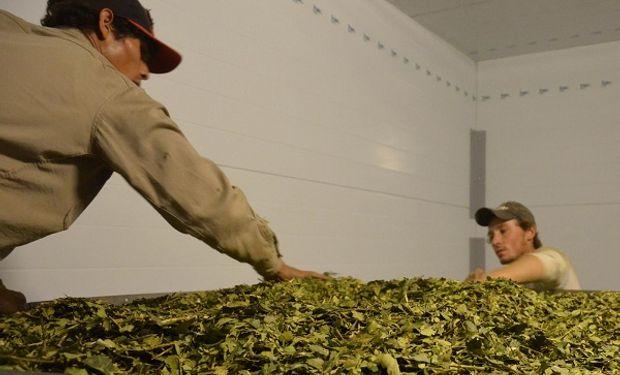 Los centros del INTI de Misiones, Corrientes, Formosa y Chaco asistieron en conjunto a una nueva firma del sector de la yerba mate.