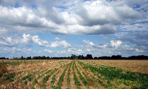 Advierten por pérdida de nutrientes de los suelos