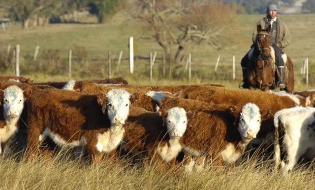 La suba del ganado en Brasil impulsó el precio promedio. Foto: Archivo El País