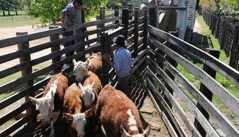 Uruguay: faena alta está solventada por los ganados de corral