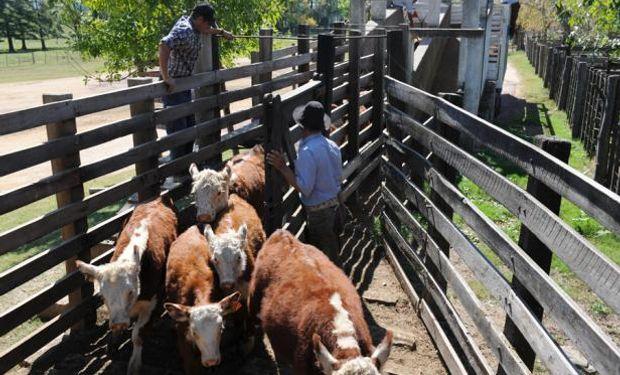 Entradas están cortas y hay mayor interés por la vaca gorda.