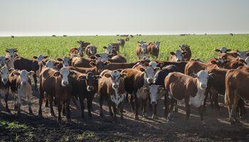 Cómo enfrenta la ganadería la actual coyuntura política