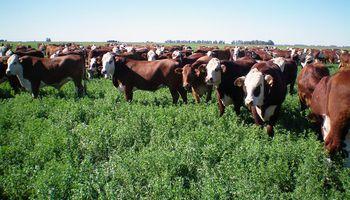 Con mayor oferta y sustentabilidad la carne será más accesible