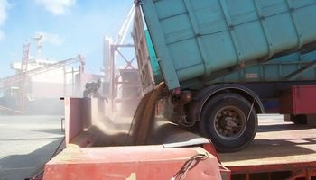 El Gobierno autorizó un nuevo cupo de trigo