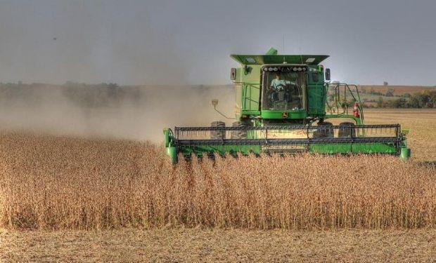 No se descarta que algunas lluvias puedan retrasar la cosecha.