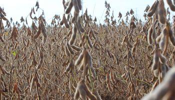 La soja frente a los aportes para la alimentación, la salud y la industria