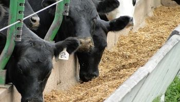 Presentan la sexta edición del Congreso Argentino de Nutrición Animal