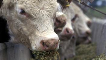 Nutrición animal: control de las micotoxinas en los silos