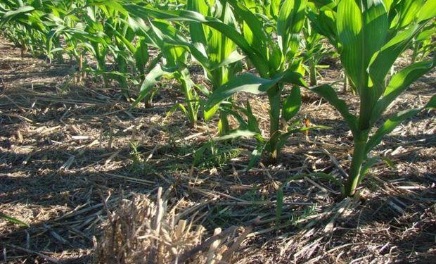 Nutriendo cultivos para alta producción