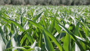 A tener en cuenta las deficiencias de nutrientes en el suelo