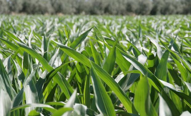 Deficiencias de nutrientes en el suelo: pautas para su diagnóstico.