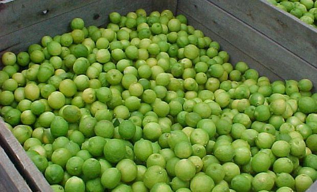 Lanzaron el Sistema de Información de Operaciones de Productos Frutícolas (Siofrutas).