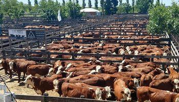Oferta y demanda de carne bovina, aviar y porcina: qué provincia produce 776 kilos por habitante