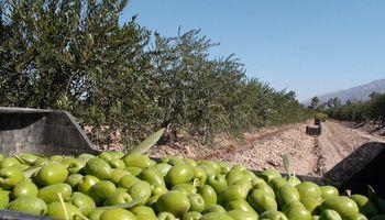 Piden que se excluya a los productos olivícolas de las negociaciones Mercosur-UE