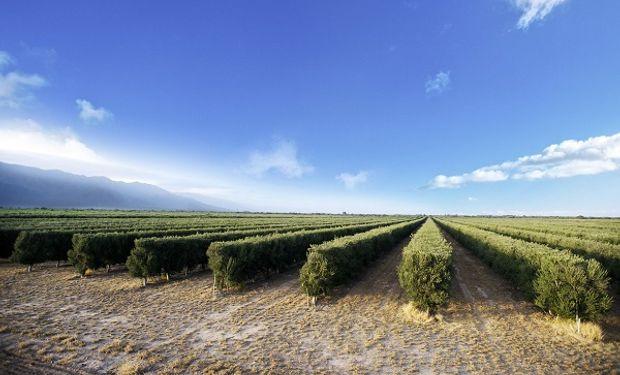 Los envíos argentinos al exterior de aceite de oliva aumentaron un 193 por ciento entre enero y octubre de 2017