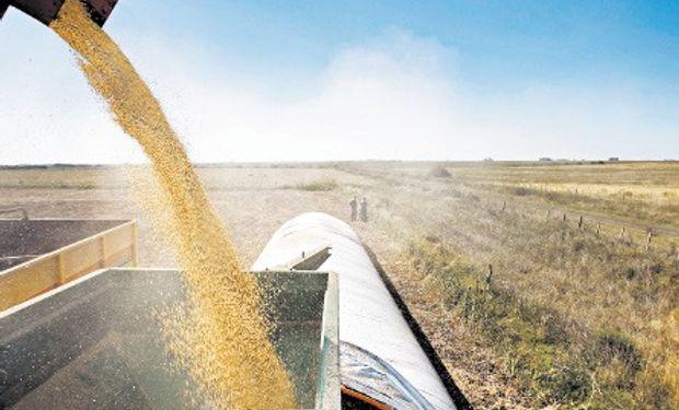 Se paralizaron las ventas de soja locales