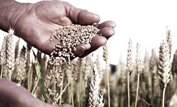 La molinería brasileña es el comprador natural de nuestro trigo.