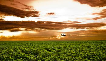 Se desplomó 30% la operación de granos a futuro