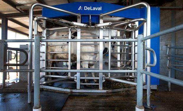La comida en el robot constituye uno de los atractivos para que la vaca se retire de la pastura y quiera ir a ordeñarse. Foto: Diego Lima