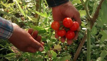 Lanzaron una Mesa para impulsar la producción orgánica en Buenos Aires