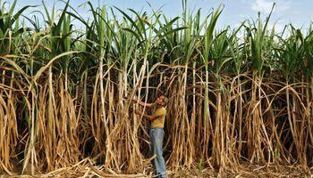 Productores de caña de azúcar misionera recibirán más de 4 millones para agregar valor