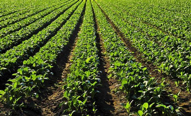 Uno de los principales cambios que podrían generarse tiene que ver con la exigencia de presentar un plan de manejo de suelos para el 100% de la actividad agropecuaria.