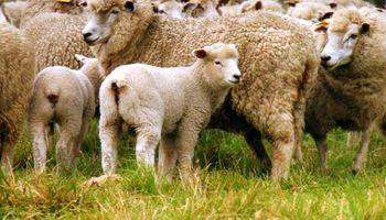 La oveja sigue siendo un buen negocio