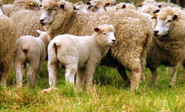 En lo que va del año la tonelada ovina está más de 7% por encima de lo que fue el año pasado.