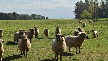 Argentina realizará la primera exportación de carne ovina a Japón