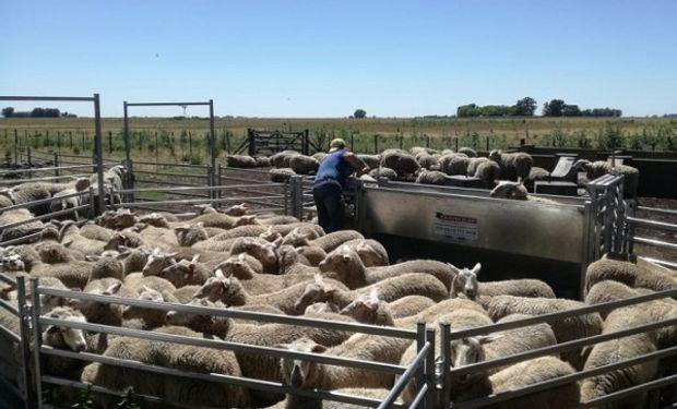 Buenos Aires destinó 40 millones de pesos para fomentar la producción ovina