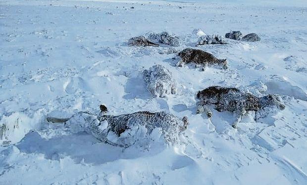Por el temporal, estiman que se perdió un 70 % de los ovinos en el sur de Río Negro