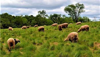 Avanza en Misiones un innovador polo ovino y caprino