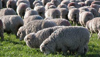 Producción ovina, un ataque inesperado