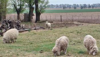 Santa Fe brindó asistencia al sector ovino por 1,9 millones de pesos