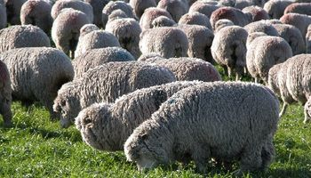 Uruguay busca exportar a la Unión Europea carne ovina con hueso