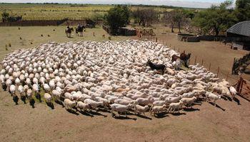Algodón, ovinos, porcinos y tabaco: los sectores de las economías regionales que están en crisis