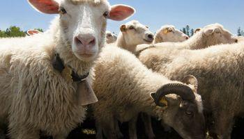Iniciativa para potenciar la producción ovina y caprina