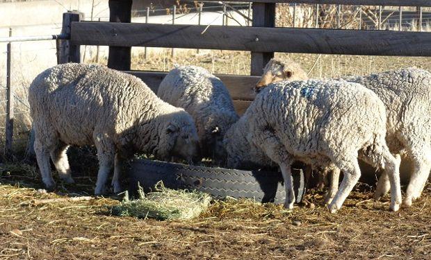 """""""Corderazo"""" en Buenos Aires: ofrecerán carne ovina a precios bajos para visibilizar la problemática del sector"""
