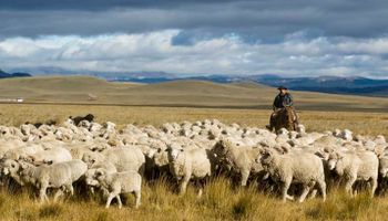 Declaran zona libre de brucelosis ovina y caprina a la región patagónica