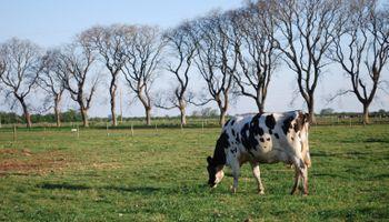 Pago por calidad de la leche: qué tan lejos está de aplicarlo la cadena láctea argentina