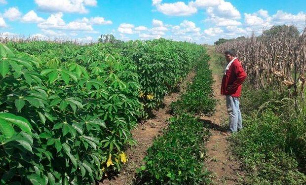 """Quiénes son los """"paiperos"""", los productores que nombró Fernández en Formosa"""