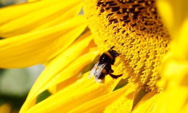 Biodiversidad y producción: Paisajes Multifuncionales en Argentina.