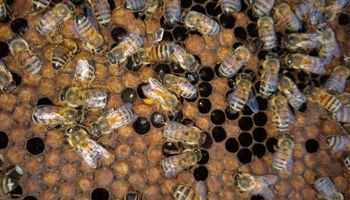 Dedicó su vida a estudiar las abejas y las flores de Córdoba y es pionero en clasificar mieles: produce 100 mil kilos por año