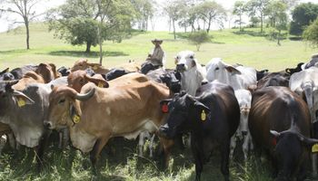 Paraguay volvió a ser el primer proveedor chileno de carne vacuna