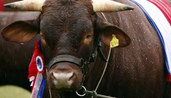 Mercado chileno de carne bovina: Paraguay líder
